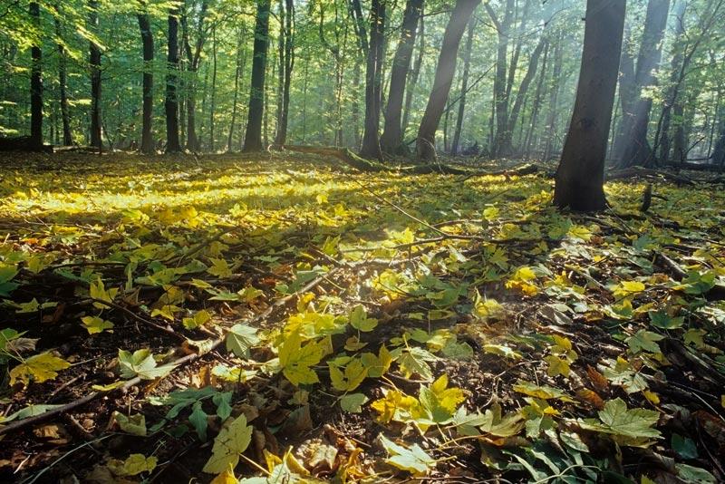 Herbst-nationalpark_hainich-presse