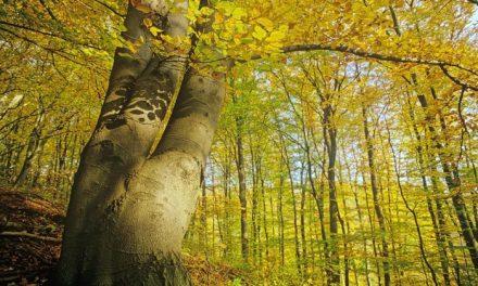 Waldbaden geht auch im Herbst –  Mitten in Deutschland die eigene Mitte finden